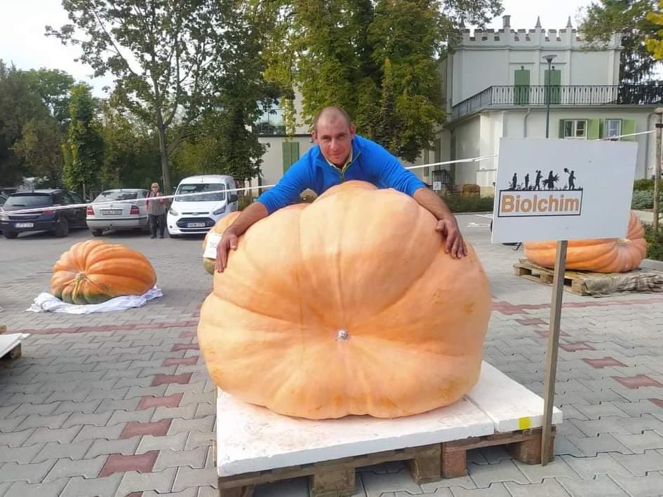 Iciri-piciri tököcske 305 kg